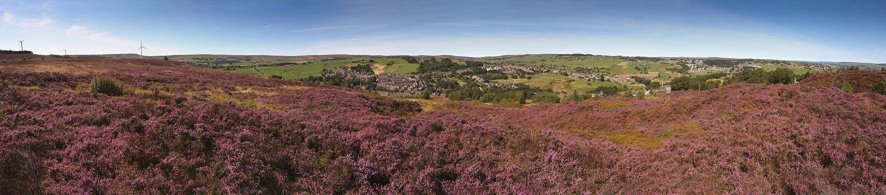 Haworth, purple heather panorama