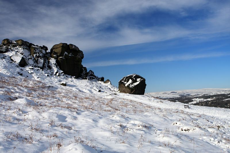 Cow and Calf Ilkley in snow