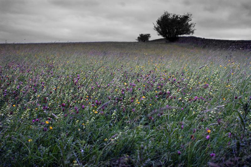 Wild flower meadow near Cullingworth