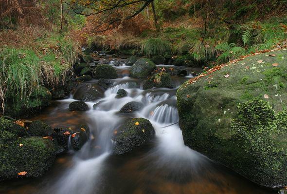 Ponden Wood