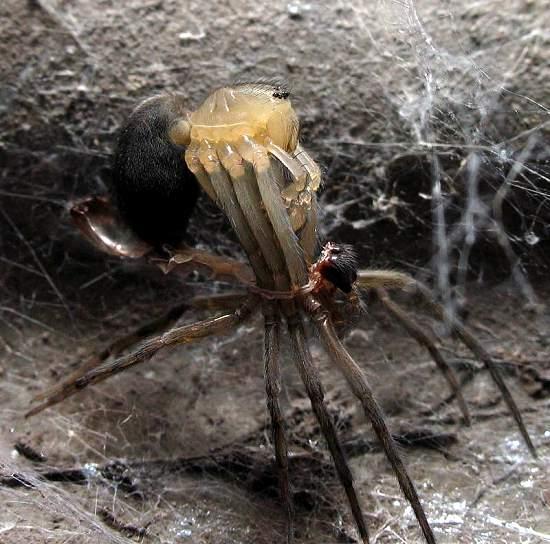 2- Spider shedding skin