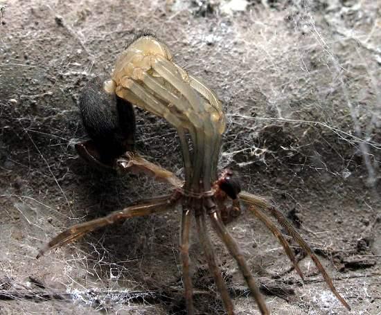 3 - Spider shedding skin
