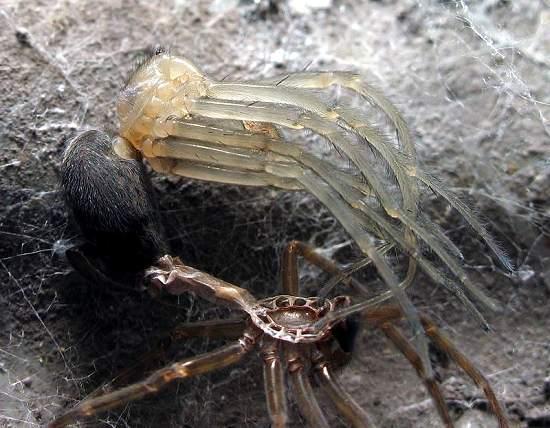4 - Spider shedding skin