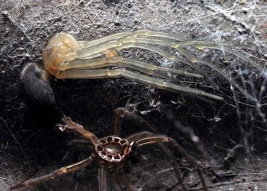 5 - Spider shedding skin
