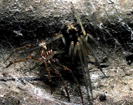 6 - Spider shedding skin